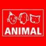 Animal, Stuttgart